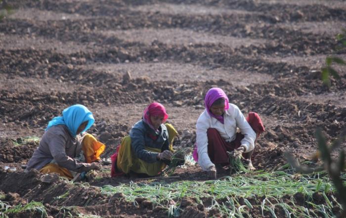 340 Zwiebelfeld drei Frauen klein